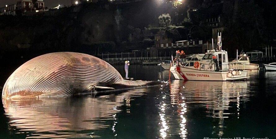 финвал, кит