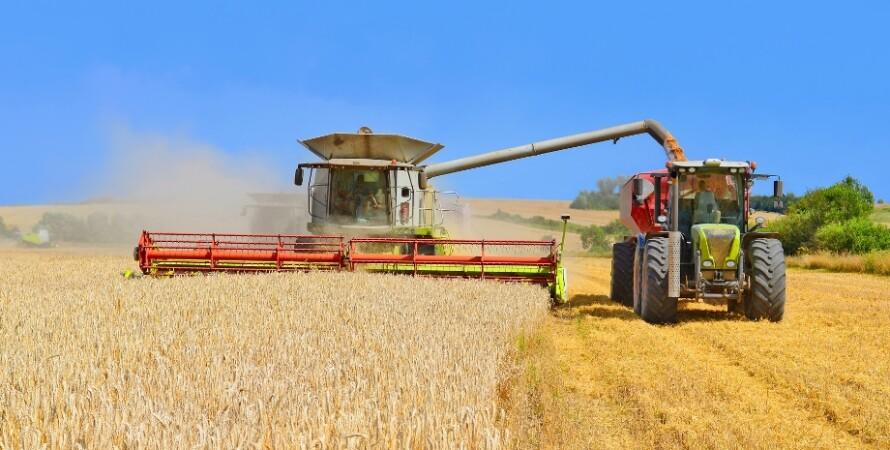 урожай, зернові, прогноз, 2021, мінекономіки, фото, пшениця