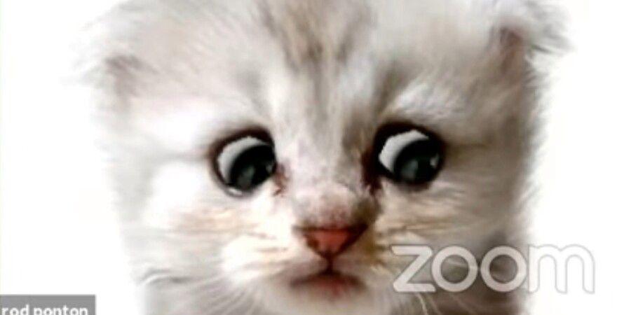 фильтр Zoom, печальный котенок, адвокат