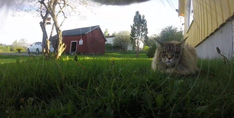 кіт, Василь, домашня тварина, фото