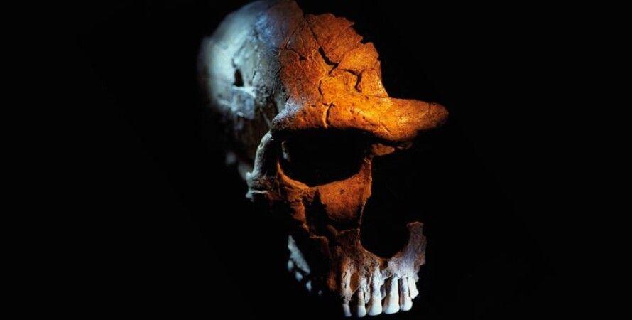 Череп неандертальца. Фото: Claire Artemyz