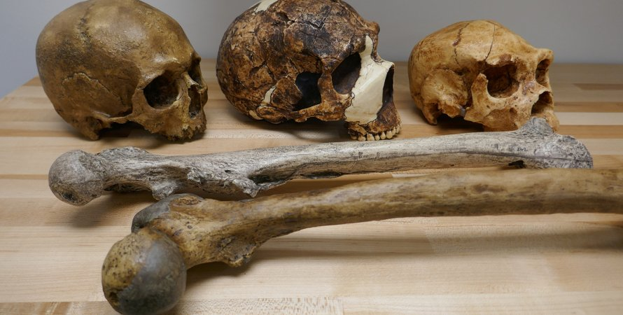 черепа, кістки, стіл, фото