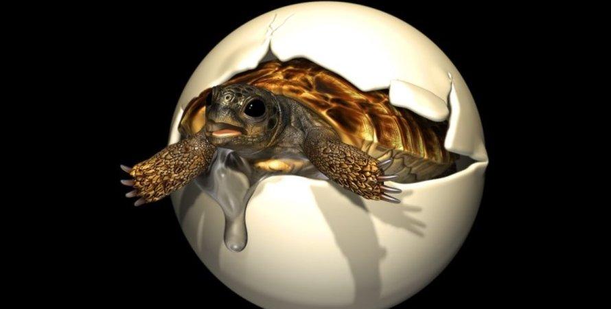 яйцо, черепаха, динозавры, кладка яиц, эмбрион