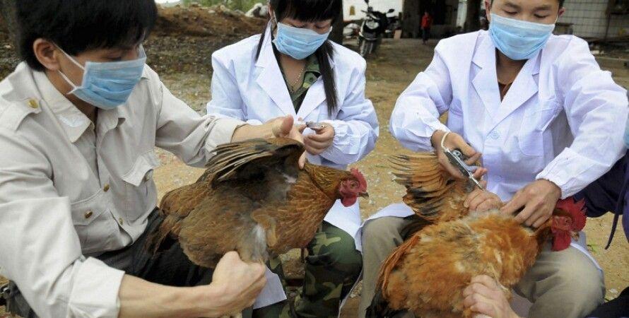 Вакцинация кур в Китае / Фото: thestar.com