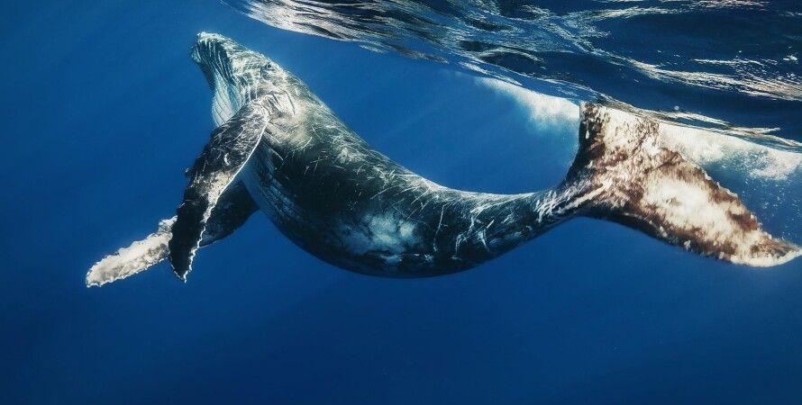 финвал, киты, океаны, песни