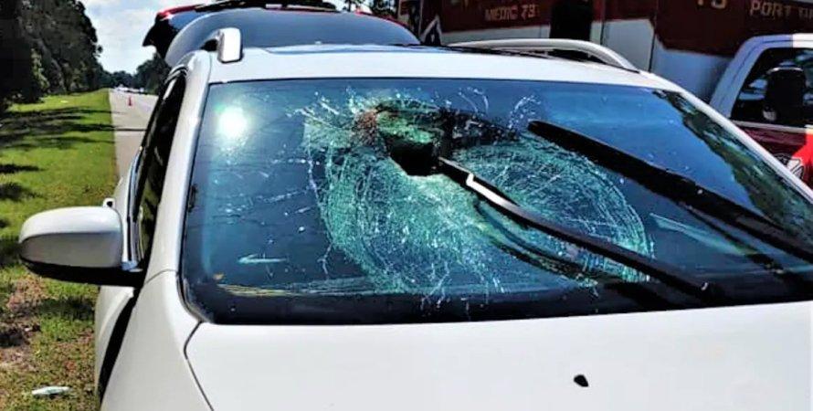 Черепаха пробила лобовое стекло авто