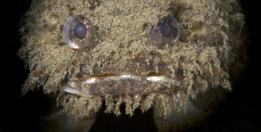 глибоководна риба, незвичайна риба