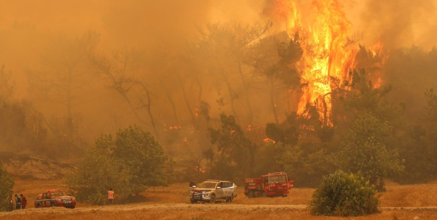 подозреваемых в поджоге лесов задержали