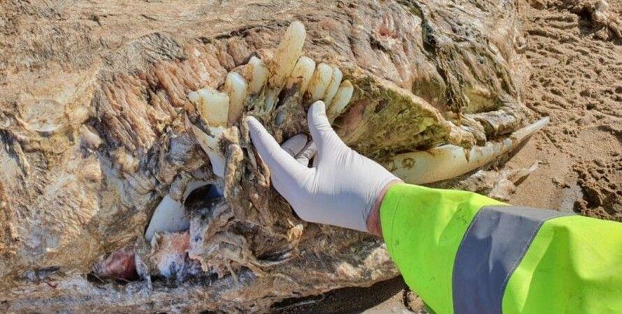 скелет, знахідка на березі