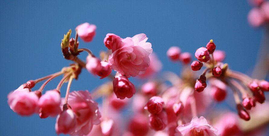 flickr/parmanandsharma