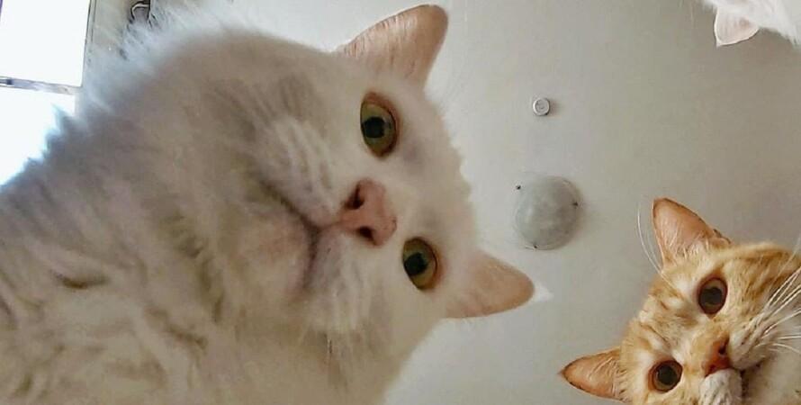 Мем, коты, Дарья Бородулина