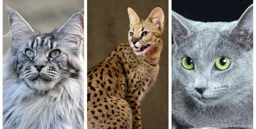 кішки, колаж, ціна