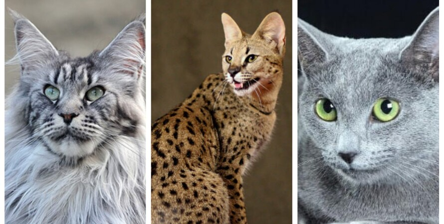 кошки, коллаж, цена