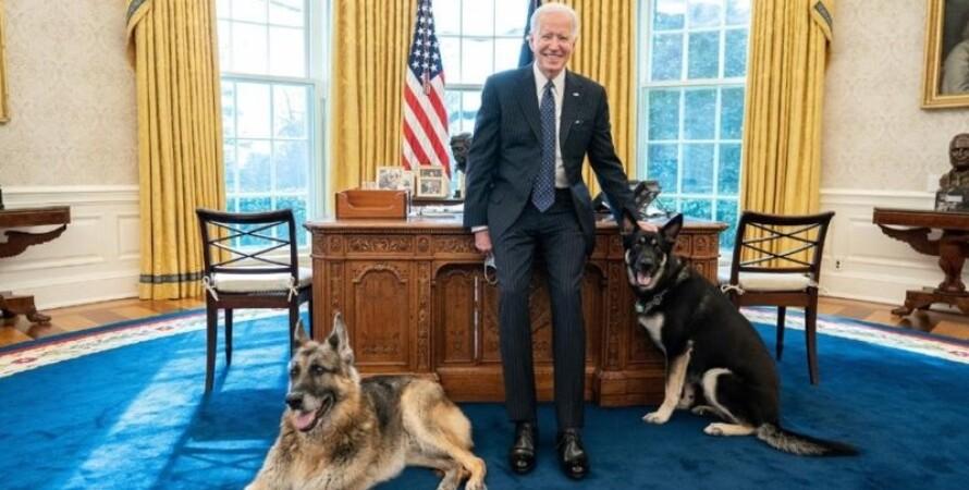 Джо Байден, собаки, вівчарки