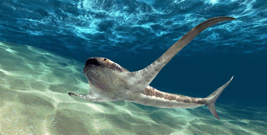 крилата акула, океан, планктон, крейдяний період