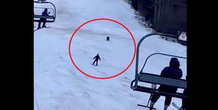 Медведь, лыжник, горнолыжный курорт, рюкзак, Румыния