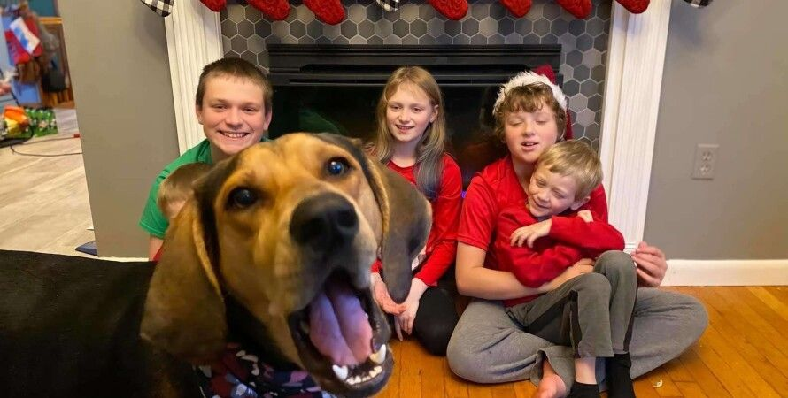 фотосессия, собака, семья, Рождество