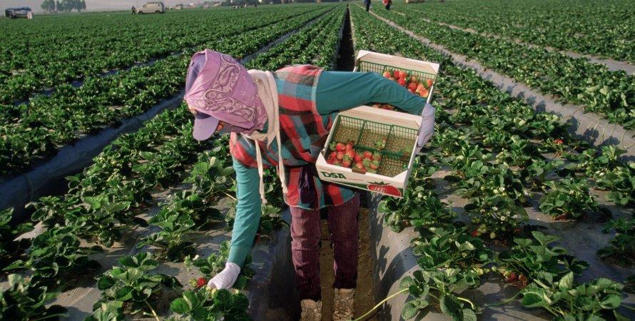 трудоустройство за рубежом, сезонная работа