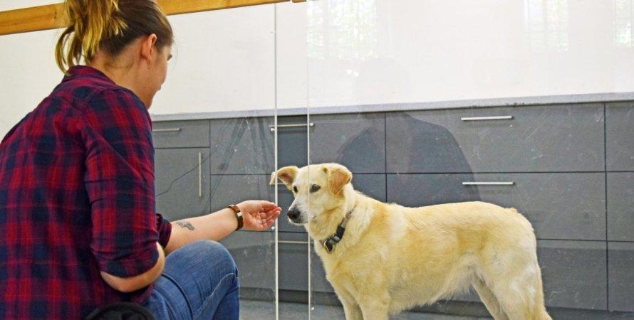 собаки, розум, теорія розуму