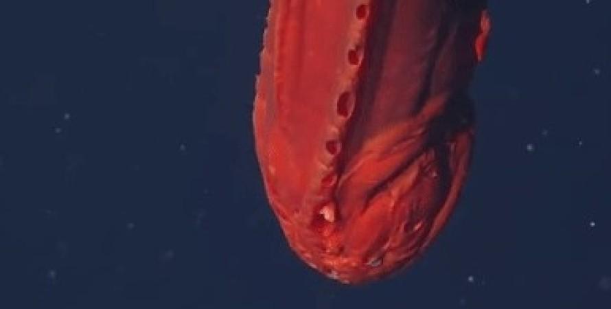 риба кит