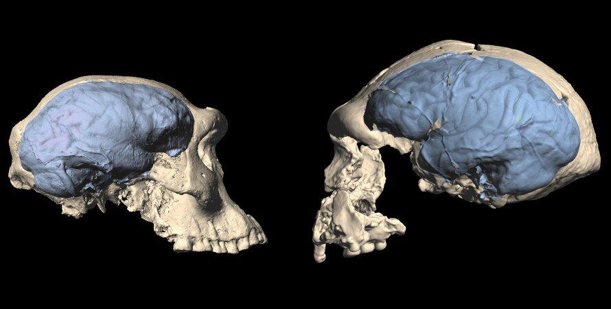 мозок, ранні люди, Homo sapiens, фото