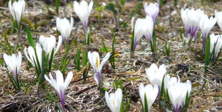 прогноз погоди в березні, Україна, погода
