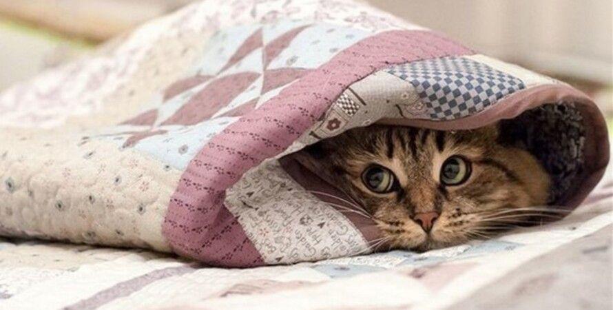 Начиная с ночи на понедельник будет становиться все холоднее.