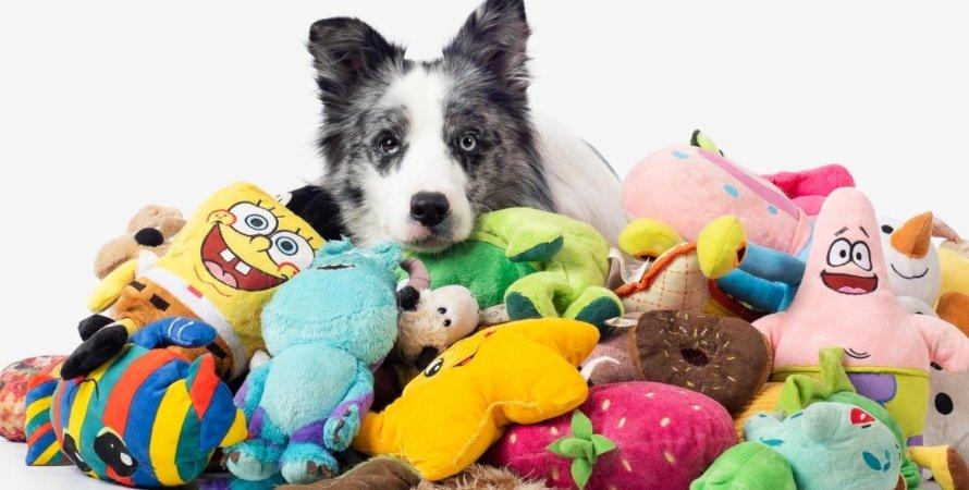 собаки, животные, талант