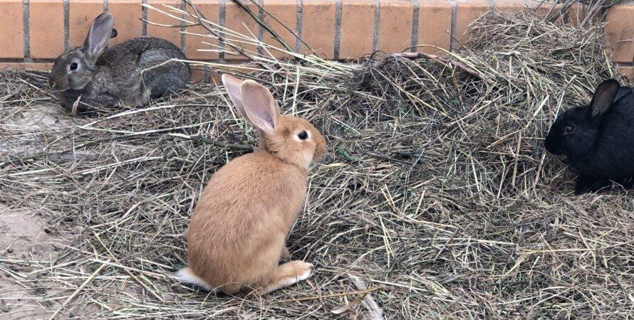 кролики, контактный зоопарк, тюрьма