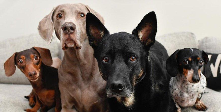 возраст собак, собаки