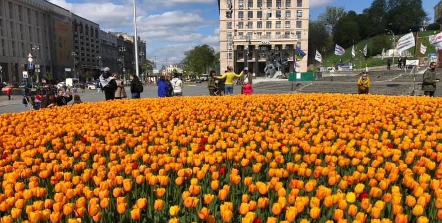 Киев, цветы, тюльпаны, Нидерланды, консульство, подарок,