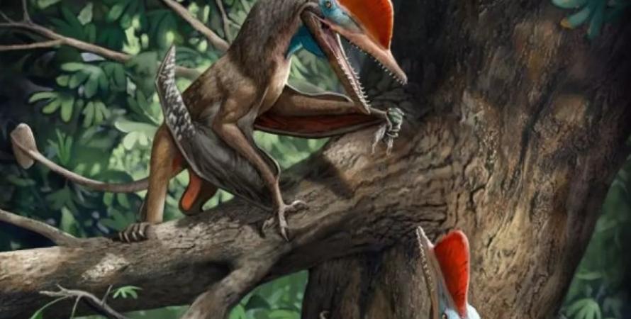 птерозавр, пальцы, руки, эволюция, Homo Sapiens