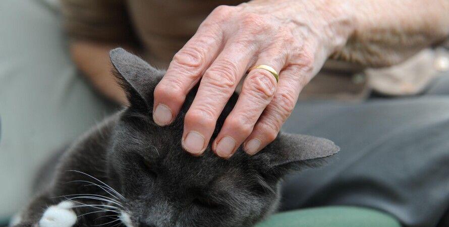 кішки, погладжування, люди