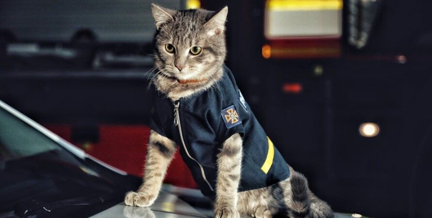 МВС, ГСЧС, рятувальник, бродячі тварини, кіт, порятунок,