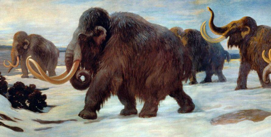 мамонты, люди, вымирание, изменение климата