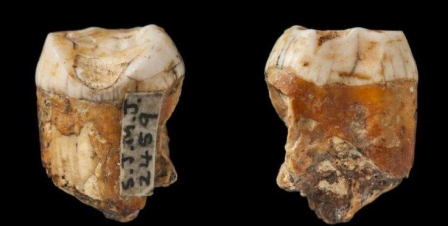 зуби, неандертальці, Homo Sapience