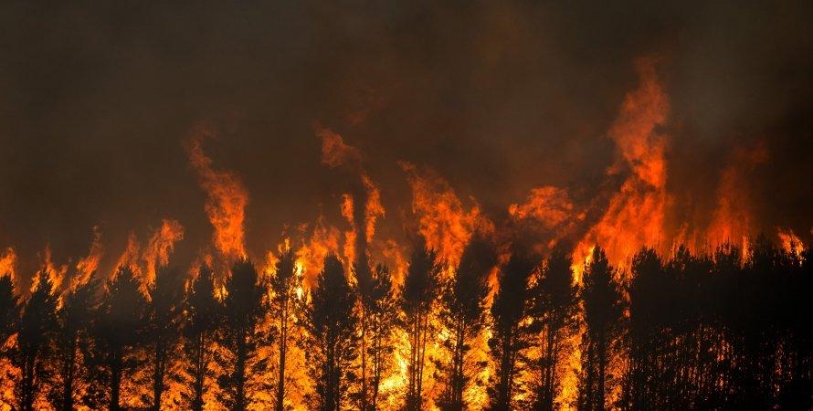 спека, Сицилія, пожежі, вогонь, дерева, фото