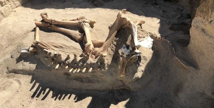 лошадь, скелет, кости