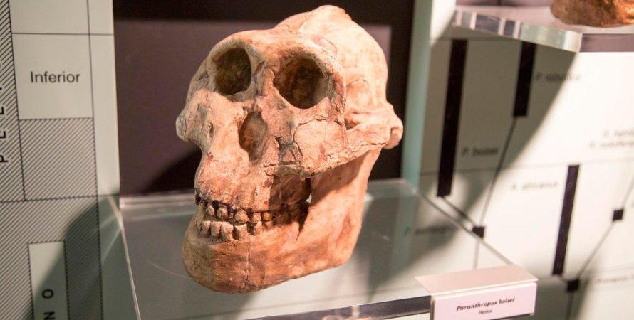 людина-Лускунчик, череп, стіл, фото