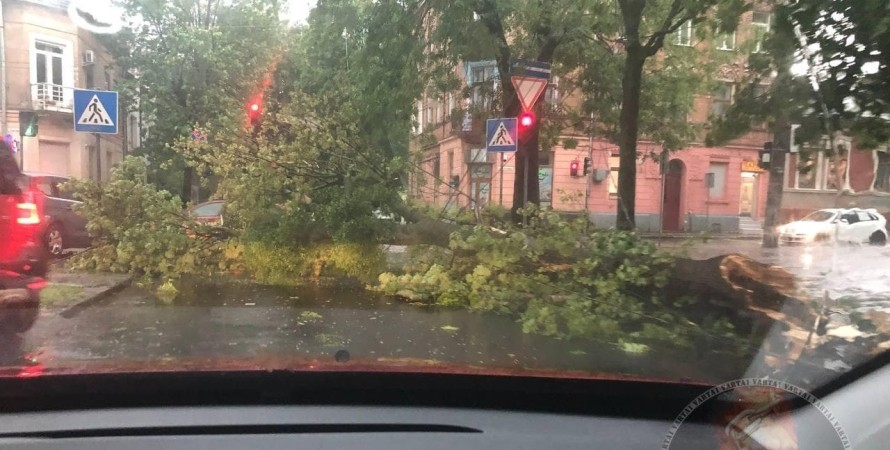 буря, що впало дерево, левів, фото