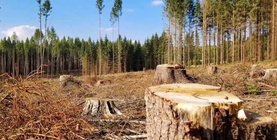 вирубка лісів в Україні, вирубка лісу
