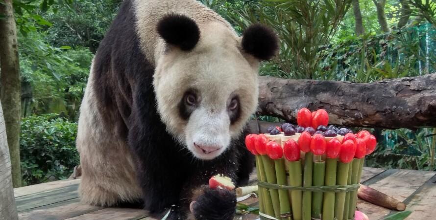 Панда Синь Синь, 38 день рождения