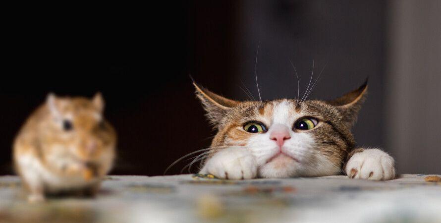 кошки, охота, инстинкт, мышь