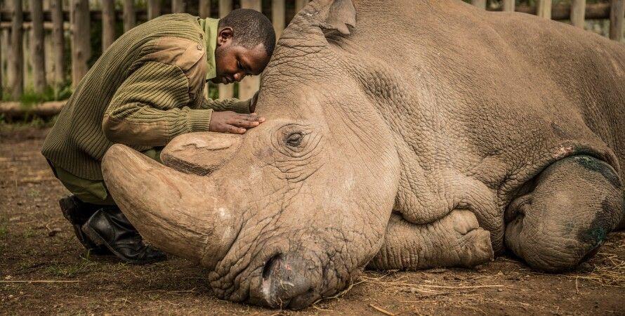 прощание с последним самцом северного белого носорога/Фото: Ami Vitale National Geographic Creative