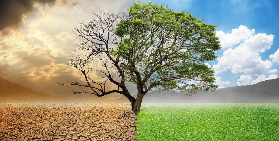 засуха, поле, дерево, фото