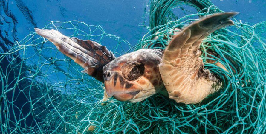 Фото: blueocean.net
