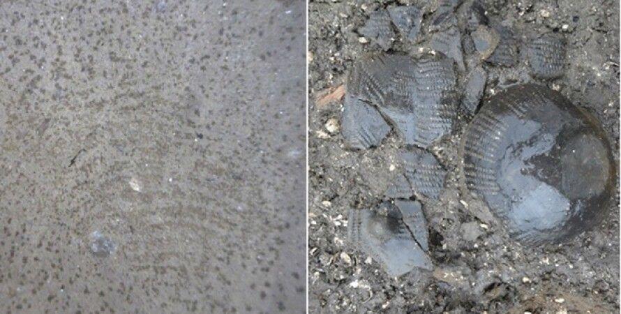 Находка датских археологов / Фото: Discovery