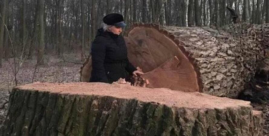 киев, голосеевский парк, дубы, деревья