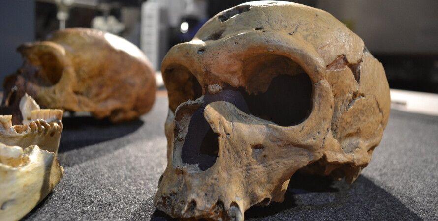 неандертальці, Homo sapiens, ДНК, мозок