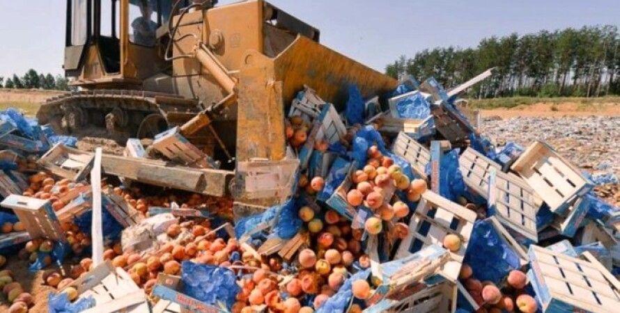 Бульдозер уничтожает санкционные продукты / Фото из открытых источников
